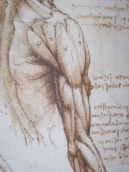 Leonardo spalla